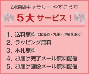 胡蝶蘭ギャラリーやすこうち 5大サービス