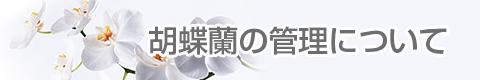 胡蝶蘭ギャラリーやすこうち 胡蝶蘭の管理について